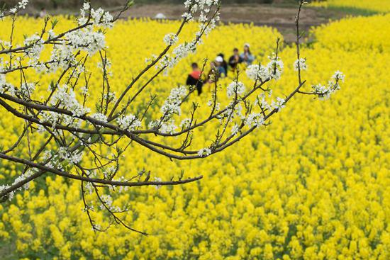 People enjoy flowers in early spring across China