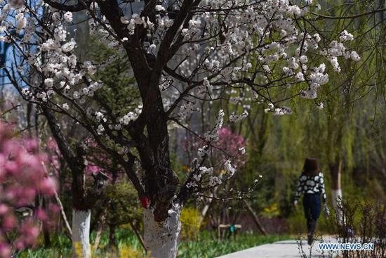 A woman walks in a park in Xining, northwest China's Qinghai Province, April 17, 2019. (Xinhua/Wu Gang)
