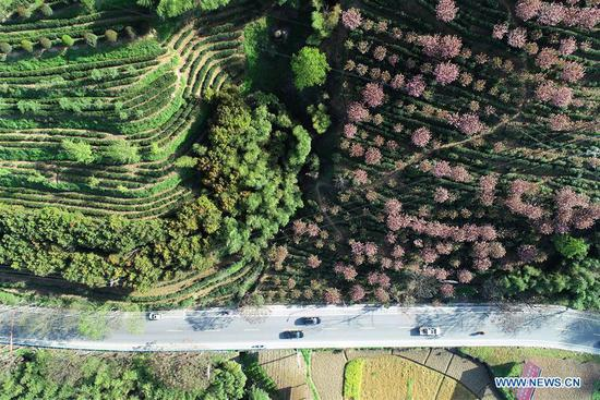 Aerial photo taken on April 4, 2019 shows a view of the Hongfu tea plantation at Gaofeng Village of Pingli County, Ankang City, northwest China's Shaanxi Province. In recent years, Ankang has been focusing on green development and seen rapid growth of eco-friendly industries. The city has also established some labor-intensive industries fabricating items as textile and toys, as a way to create jobs for low-income residents. (Xinhua/Shao Rui)