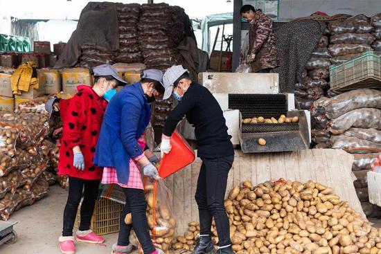 Changsha steps up efforts to ensure vegetable supply