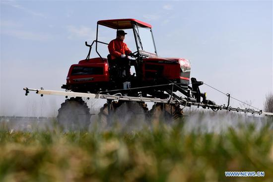A villager works in fields in Matou Township of Tancheng County in Linyi City, east China's Shandong Province, Feb. 10, 2020. Farmers across China have resumed production after taking necessary protection measures against novel coronavirus. By Feb. 10, about 94.6 percent of the country's major grain production and processing firms had resumed production. (Photo by Fang Dehua/Xinhua)