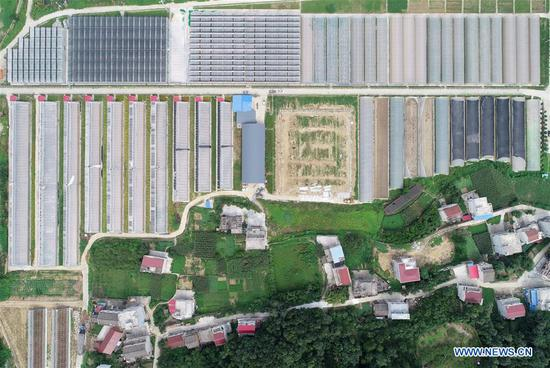 Aerial photo taken on Aug. 8, 2019 shows a view of the selenium-rich agricultural park at Zhongcheng Village, Hanbin District of Ankang City, northwest China's Shaanxi Province. In recent years, Ankang has been focusing on green development and seen rapid growth of eco-friendly industries. The city has also established some labor-intensive industries fabricating items as textile and toys, as a way to create jobs for low-income residents. (Xinhua/Shao Rui)