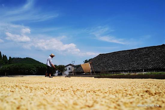 A farmer dries rice in Zhangjiajie, central China's Hunan Province, Sept. 9, 2018. (Xinhua/Wu Yongbing)
