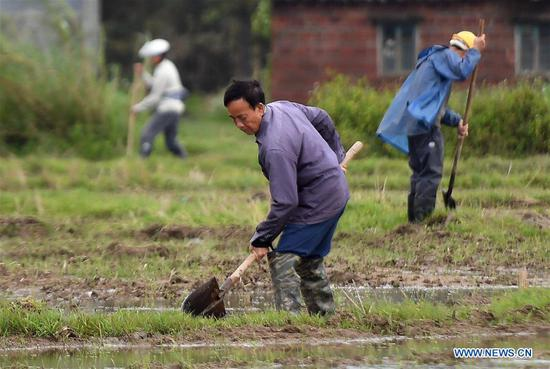 Farmers work in Banping Village in Kangxiling Town of Qinzhou, south China's Guangxi Zhuang Autonomous Region, March 7, 2019. Farmers in Qinzhou have been busy with planting early rice in spring. (Xinhua/Zhang Ailin)