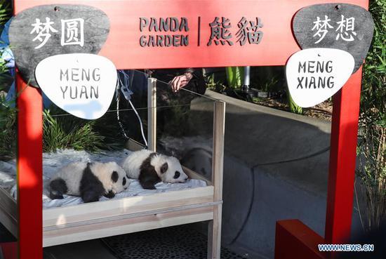柏林的双胞胎熊猫宝宝有名字