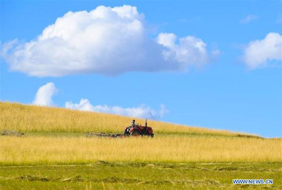 A herdsman operates a machine to mow grass on a grassland in Xilin Gol League, north China's Inner Mongolia Autonomous Region, Sept. 7, 2020. The pastoral area in Xilin Gol has entered into its grass mowing season. (Xinhua/Peng Yuan)
