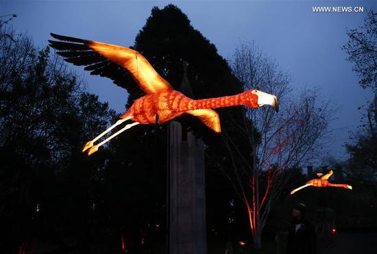 Illuminated flying flamingos are seen during the launch of