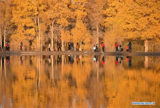Tourists go sightseeing at the Jinta desert populus euphratica forest scenic spot in Jiuquan, northwest China's Gansu Province, Oct. 21, 2019. (Xinhua/Ma Ning)