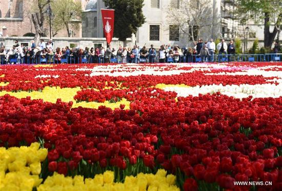 Photo taken on April 12, 2018 shows the tulip carpet at Sultanahmet Square in Istanbul, Turkey. Some 30 million tulips are giving Istanbul a big facelift, promising a seasonal feast for the eyes in streets, parks and gardens. (Xinhua/He Canling)