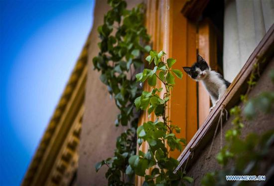 A cat is seen at the ancient city of Kashgar, northwest China's Xinjiang Uygur Autonomous Region, July 9, 2019. In the first half of 2019, the ancient city of Kashgar received over 310,000 visits. (Xinhua/Zhao Ge)