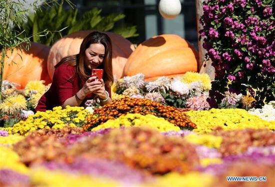 A woman takes photos at a chrysanthemum exhibition held in Xiaochang Village, Dachang Hui Autonomous County of north China's Hebei Province, on Oct. 8, 2019, also the day of Cold Dew, one of the 24 traditional Chinese solar terms. (Xinhua/Wang Xiao)