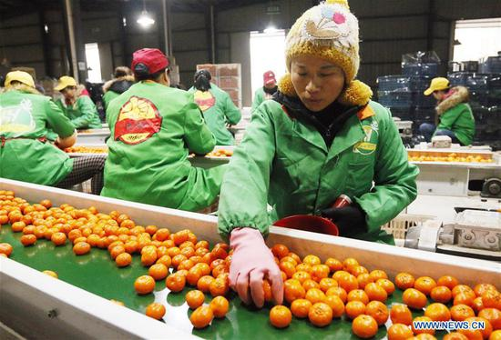 Workers are on duty at a fruit company at Nanfeng County of Fuzhou City, east China's Jiangxi Province, Feb. 11, 2019, the first workday after Spring Festival holiday. Millions of Chinese return to work as the week-long Spring Festival holiday ends. (Xinhua/Yuan Zhi)