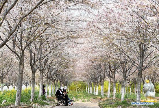 Tourists enjoy themselves at a cherry tree garden in Xingyang, central China's Henan Province, March 24, 2020. (Xinhua/Hao Yuan)