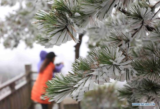 People enjoy the scenery of frost at Wulingyuan scenic spot in Zhangjiajie, central China's Hunan Province, Nov. 23, 2020. (Photo by Wu Yongbing/Xinhua)