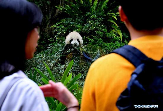 Tourists view the giant panda at the Taipei Zoo in Taipei, southeast China's Taiwan, May 6, 2019. At the Taipei Zoo, the two giant pandas Tuantuan (male) and Yuanyuan (female) have drawn large crowds eager to catch a glimpse of the chubby bears through the past ten years. The two giant pandas were sent to Taiwan from the Chinese mainland in late 2008. In 2013, Tuantuan and Yuanyuan had a baby called Yuanzai. (Xinhua/Zhang Guojun)