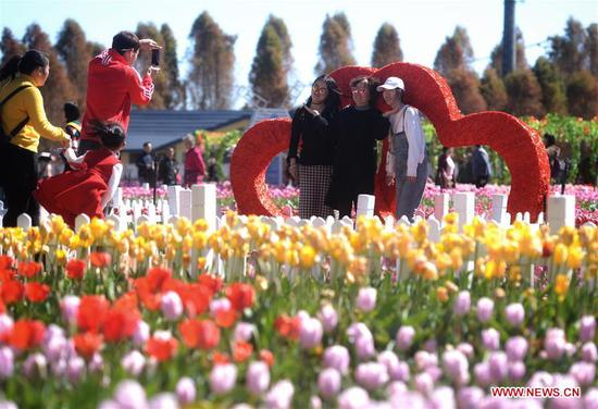 Tourists pose for photos amid tulip flowers at a wetland park in Kunming, southwest China's Yunnan Province, Feb. 6, 2019. Over 50 kinds of tulip flowers are in blossom at the park. (Xinhua/Qin Qing)