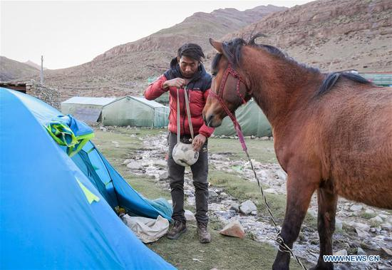 A villager from Gangsha Village pitches a tent and feeds a horse at a rest site in Ali Prefecture, southwest China's Tibet Autonomous Region, June 25, 2018. Gangsha Village is located at the foot of Mount Kangrinboqe, a sacred Hindu and Buddhist site in Ali. Since the 1980s, local farmers and herdsmen have started to receive pilgrims and tourists from home and abroad. They upgraded services of tourism industry in the past 30 years, and tourism increased villagers' income. (Xinhua/Liu Dongjun)