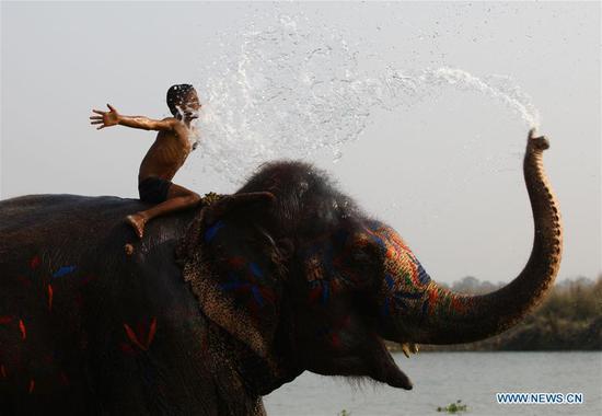 A boy enjoys elephant bathing during the 15th Elephant Festival in Sauraha, a tourism hub in southwest Nepal's Chitwan district on Dec. 27, 2018. (Xinhua/Sunil Sharma)