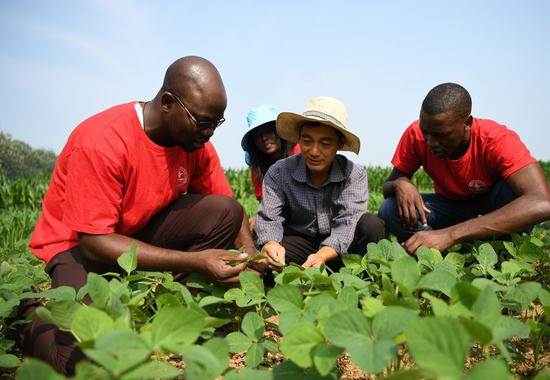 Zigani Saturnin (L), a student from Burkina Faso, checks crop growth in the field at an agricultural experimental base in Quzhou County, north China's Hebei Province, July 23, 2020. (Xinhua/Zhu Xudong)