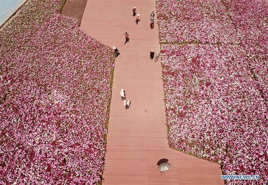 Aerial photo taken on April 8, 2018 shows the view of flowers at Haixinsha Park in Guangzhou, capital of south China's Guangdong Province. (Xinhua/Cai Yang)