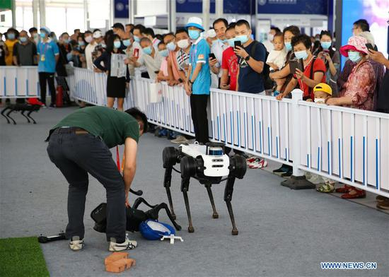 An exhibitor examines and repairs two quadruped robots after they clashed with each other during the performance at the service robots exhibition area of the 2020 China International Fair for Trade in Services (CIFTIS) in Beijing, capital of China, Sept. 9, 2020. (Xinhua/Pan Siwei)