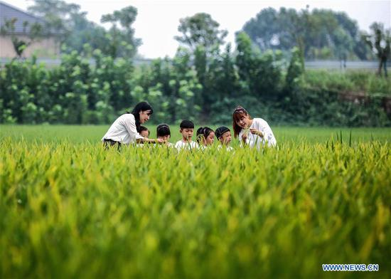 Children observe ears of rice under the guidance of their teachers during an event held ahead of farmers' harvest festival in Changxing, east China's Zhejiang Province, Sept. 21, 2020. The third Chinese farmers' harvest festival falls on Sept. 22, 2020. (Xinhua/Xu Yu)