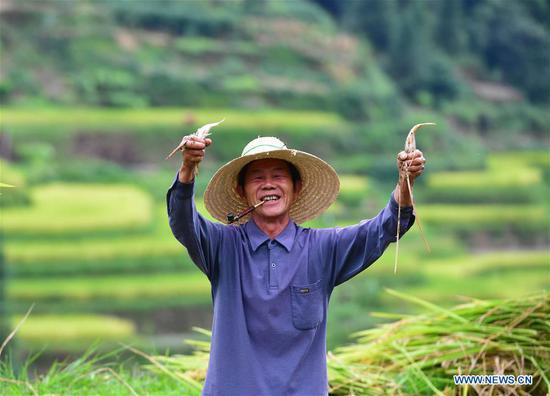 A villager shows the carp he raised in paddy rice fields at Wuying, a village of Miao ethnic group under joint administration by Rongshui County in Guangxi Zhuang Autonomous Region and its neighbouring Congjiang County of Guizhou Province, Sept. 2, 2019. Farmers of Miao ethnic group here are busy harvesting paddy rice as the weather is fair recently. (Xinhua/Huang Xiaobang)