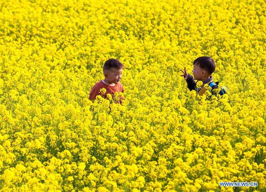 Children play in a cole flower field in Xishimen Village of Wu'an City, north China's Hebei Province, April 7, 2019. (Xinhua/Wang Xiao)