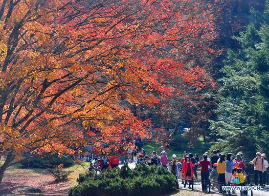 People visit the botanical garden at Lushan scenic spot in east China's Jiangxi Province, Nov. 17, 2019. (Xinhua/Hu Chenhuan)