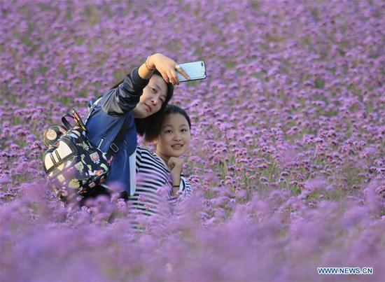 Tourists take a selfie among flowers in Yancheng City, east China's Jiangsu Province, Oct. 7, 2018. China witnessed 726 million domestic tourists during the National Day holidays on Oct. 1-7, growing by 9.43 percent year on year. (Xinhua/Zhou Gukai)