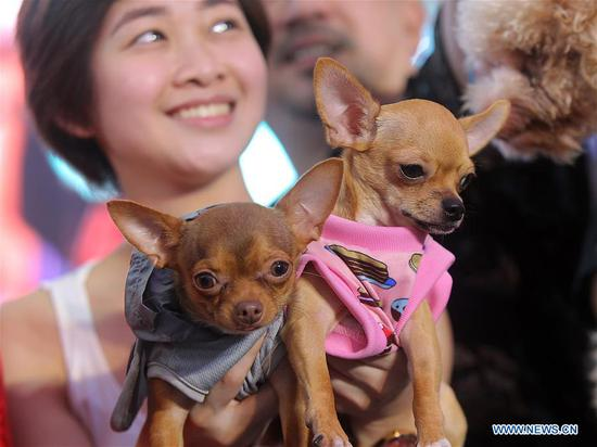 People and their pet dogs participate in a pet parade in Quezon City, the Philippines, Oct. 7, 2018. (Xinhua/Rouelle Umali)