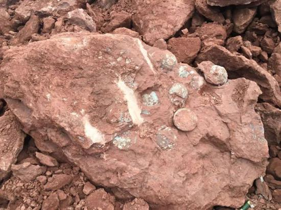 Dinosaur egg fossils discovered in the city of Yiwu, Zhejiang Province, October 4, 2018. [Photo: thepaper.cn]
