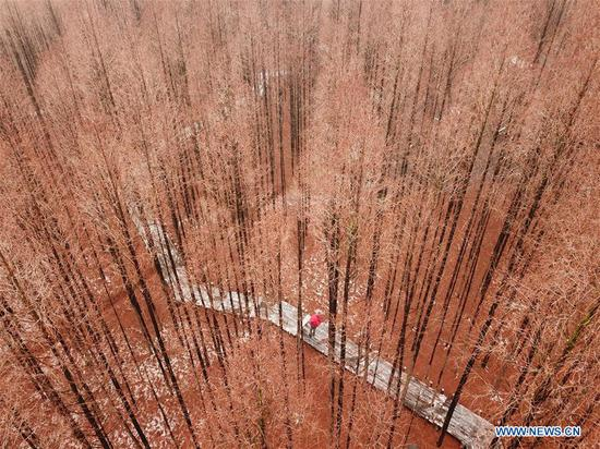 Aerial photo taken on Jan. 10, 2019 shows the scenery of a forest after snow in Jiangba Township in Huaian, east China's Jiangsu Province. (Xinhua/Wan Zhen)