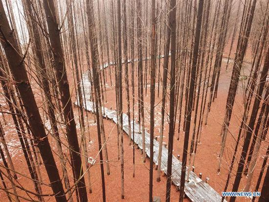 1Aerial photo taken on Jan. 10, 2019 shows the scenery of a forest after snow in Jiangba Township in Huaian, east China's Jiangsu Province. (Xinhua/Wan Zhen)