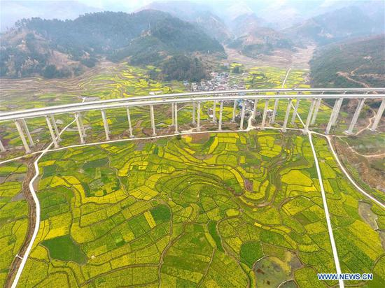 Aerial photo taken on March 4, 2019 shows an elevated bridge above cole flower fields in Congjiang County in southwest China's Guizhou Province. (Xinhua/Wang Bingzhen)