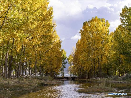 Photo taken on Oct. 6, 2019 shows woods in the north of the Lhasa River valley in Lhasa, southwest China's Tibet Autonomous Region. (Photo by Sun Fei/Xinhua)