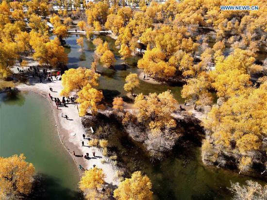 Aerial photo taken on Oct. 11, 2020 shows tourists visiting populus euphratica forest in Jinta County of Jiuquan, northwest China's Gansu Province. (Photo by Chen Li/Xinhua)