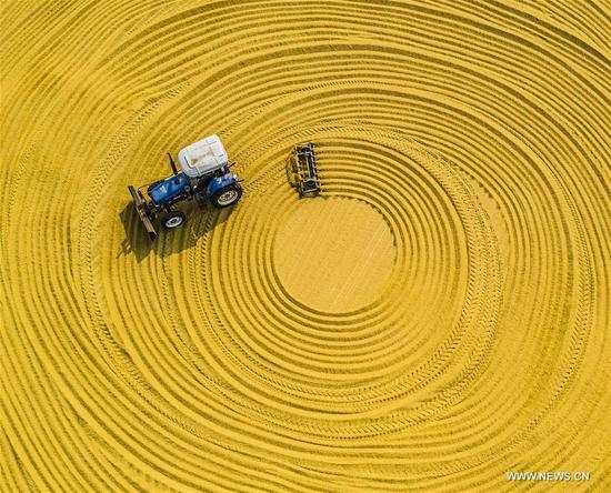A farming machine dries unhusked rice in the sun at a farm in Sihong, east China's Jiangsu Province, Oct. 23, 2018, the day of the First Frost. First Frost, also known as Shuangjiang, is one of the 24 solar terms of the Chinese lunar calendar. (Xinhua/Zhang Lianhua)