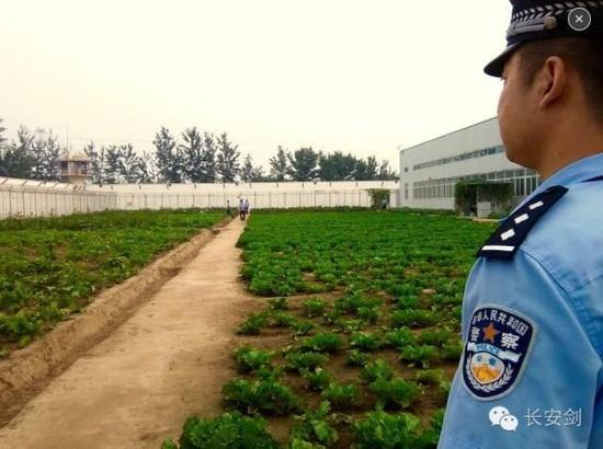 A vegetable garden in the Yancheng prison.All the vegetables and fruits come from the garden and orchard inside the prison, which are  planted by the inmates.