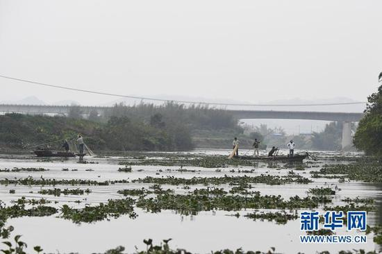 "Wildlife experts in south China are trying to rescue an endangered white dolphin that is in worsening health after mistakenly swimming into a freshwater river a week ago. The Chinese white dolphin, about 30 years old, equivalent to 70 human years, swam into the Baisha River, a tributary of the Pearl River in Jiangmen, Guangdong Province Feb.1, 2017. The animal is in a stretch about 100 km from the river's estuary. ""As it is too old and has been stranded for many days, the skin of the dolphin is festering and its health is deteriorating ... its moving area is shrinking,"" said Feng Kangkang, a worker with Jiangmen Chinese White Dolphin Nature Reserve, on Thursday. The team is watching the dolphin around-the-clock through devices and recording its health condition, according to the Guangdong provincial ocean and fishery department. Dubbed the ""giant pandas of the sea,"" Chinese white dolphins are mainly scattered in a few coastal areas and exist only in small numbers, with about 2,000 detected at the mouth of the Pearl River. (Photo/Xinhua)"