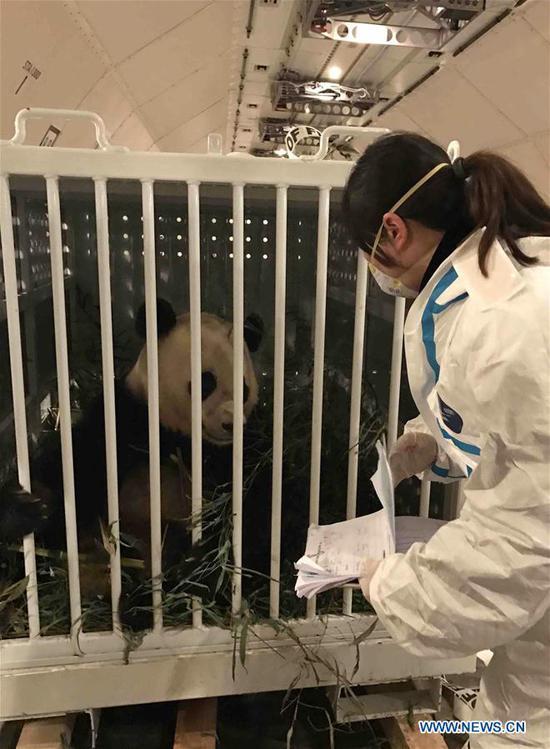 U s born panda bao bao arrives in china 39 s sichuan china for Bureau quarantine