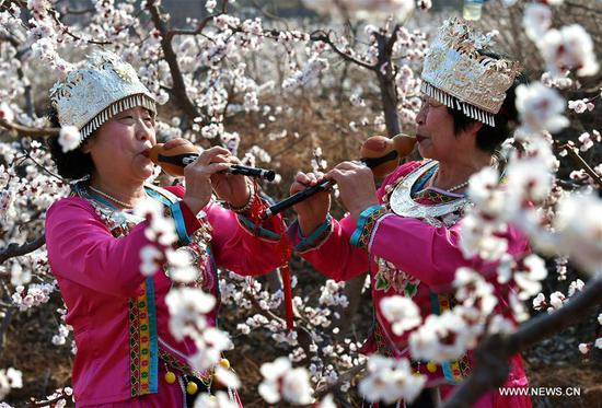 People play Chinese gourd flute music at an apricot farm in Xiaxian County under Yuncheng City, north China's Shanxi Province, March 14, 2017. (Xinhua/Cao Yang)