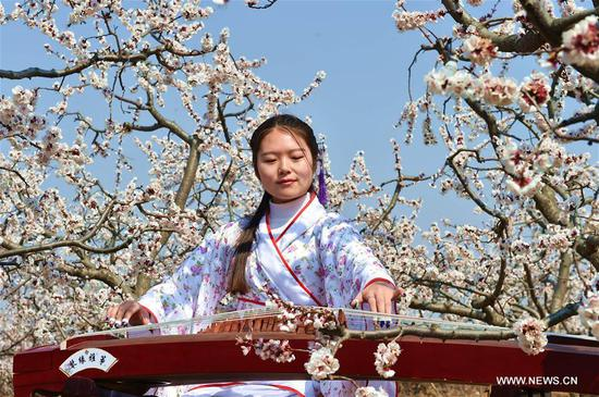 A woman plays Chinese traditional instrument Guzheng at an apricot farm in Xiaxian County under Yuncheng City, north China's Shanxi Province, March 14, 2017. (Xinhua/Cao Yang)