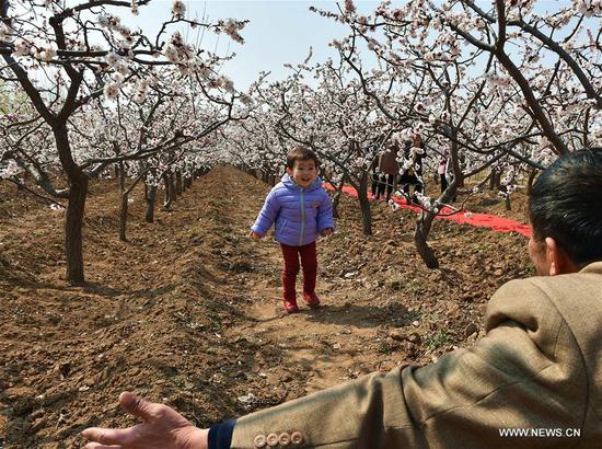 A child and his grandpa play at an apricot farm in Xiaxian County under Yuncheng City, north China's Shanxi Province, March 14, 2017. (Xinhua/Cao Yang)