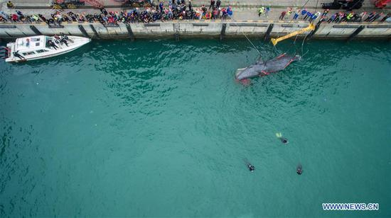 Divers clamp the stranded sperm whale for lifting at a dock in Huizhou Harbor in Huizhou, south China's Guangdong Province, March 15, 2017. On the morning of March 12, the 12-meter-long whale was spotted trapped in fishing nets in the waters of Daya Bay. After the whale was freed from the nets, authorities and zoologists tried to guide it back to the deep sea. However, it continued to swim in shallow waters off Shenzhen and Huizhou cities and was confirmed to have been stranded near the wharf on Tuesday afternoon. Experts speculated that, rather than being lost, the whale intentionally entered shallow waters due to its bad health. (Xinhua/Mao Siqian)