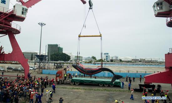 The corpse of a stranded sperm whale is lifted at a dock in Huizhou Harbor in Huizhou, south China's Guangdong Province, March 15, 2017. On the morning of March 12, the 12-meter-long whale was spotted trapped in fishing nets in the waters of Daya Bay. After the whale was freed from the nets, authorities and zoologists tried to guide it back to the deep sea. However, it continued to swim in shallow waters off Shenzhen and Huizhou cities and was confirmed to have been stranded near the wharf on Tuesday afternoon. Experts speculated that, rather than being lost, the whale intentionally entered shallow waters due to its bad health. (Xinhua/Mao Siqian)