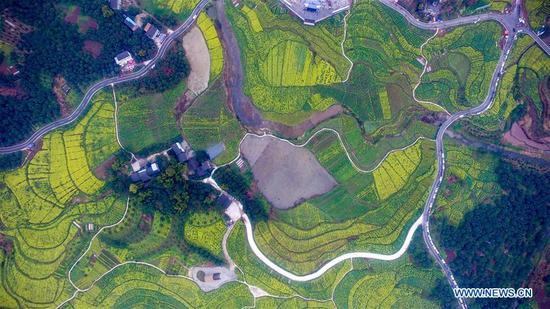 Aerial photo taken on March 16, 2017 shows cole flowers at Linfeng Township in Changshou District of Chongqing, southwest China. (Xinhua/Li Renzi)