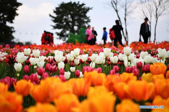 People view blooming tulips at Changshouhu scenic spot in Chongqing, southwest China, March 16, 2017. (Xinhua/Wang Quanchao)