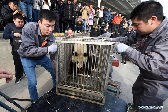 Staff members carry giant panda Shu Lan at the airport in Lanzhou, capital of northwest China's Gansu Province, March 16, 2017. The 23-year-old giant panda will leave Lanzhou on Thursday for her hometown in southwest China's Sichuan Province due to health concerns. The Lanzhou zoo held a farewell party for Shu Lan on Thursday morning. Many locals came to say goodbye. Experts said Shu Lan is in normal health, but concluded that she has shown some symptoms of aging, such as weight loss. Her age is equivalent to about 70 human years. Therefore, experts suggested sending Shu Lan to a conservation and research center for Giant Panda in Sichuan to help her maintain her health. (Xinhua/Fan Peichen)