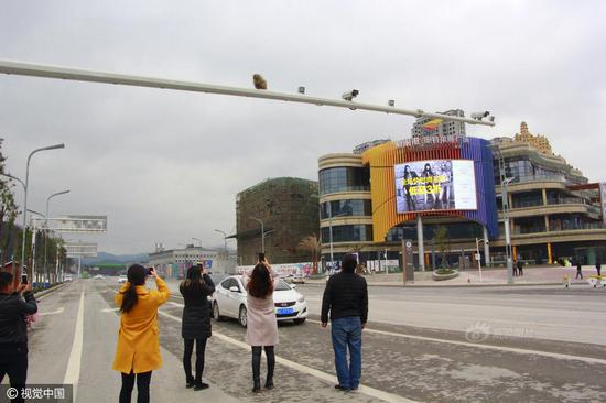 A circus monkey climbed up onto a lamp post in Zunyi city, Guizhou province, leading to a rear-ending accident on March 17, 2017.